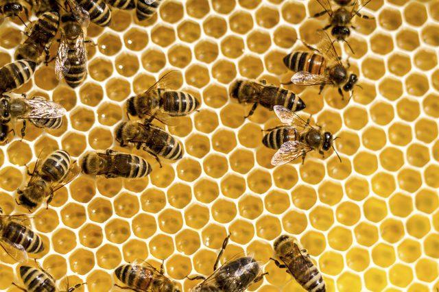 bee removal kenosha, beehive removal kenosha