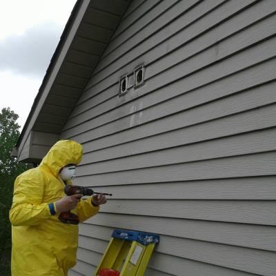 air vents, bird, bird mites, decompose, dead bird, mites, hazardous