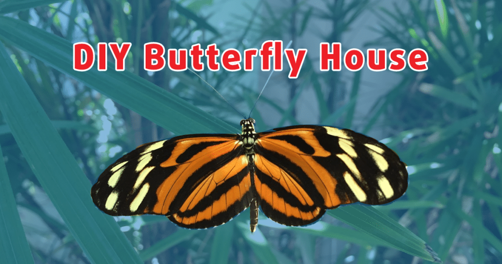 Build A Butterfly House in Just 5 Steps!