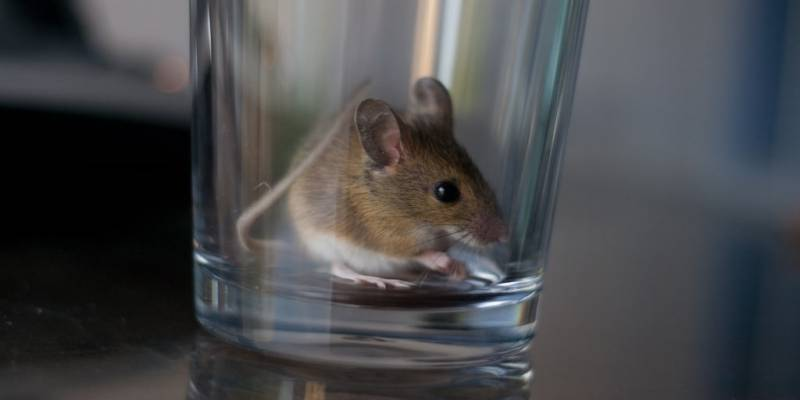 keep mice out of house, home pest control kenosha, kenosha mouse control
