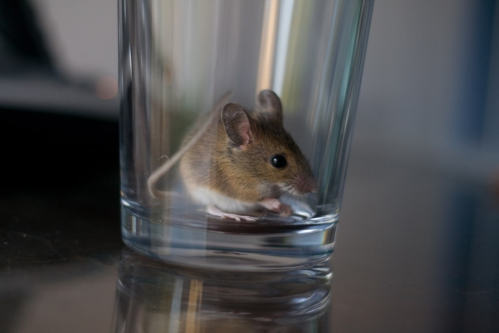 How to Keep Mice Out of Your Home This Winter