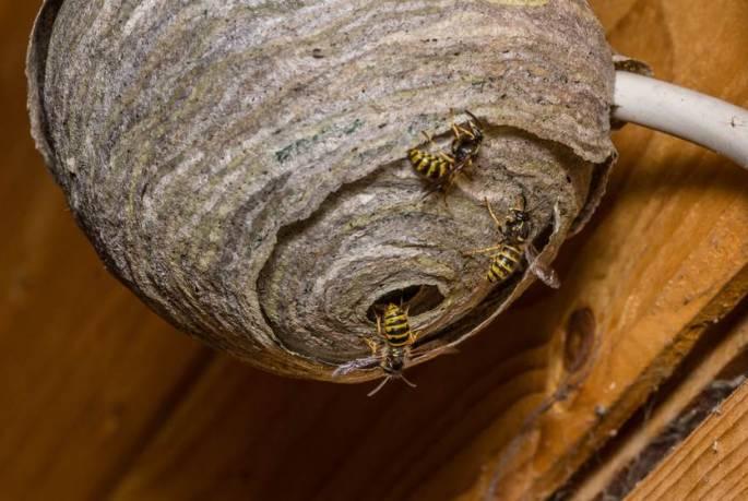 wasp removal service kenosha